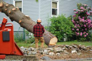 Tree faller job done in East Kelowna