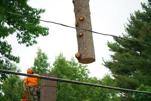Tree removed over powerline using a crane in Lake Country BC