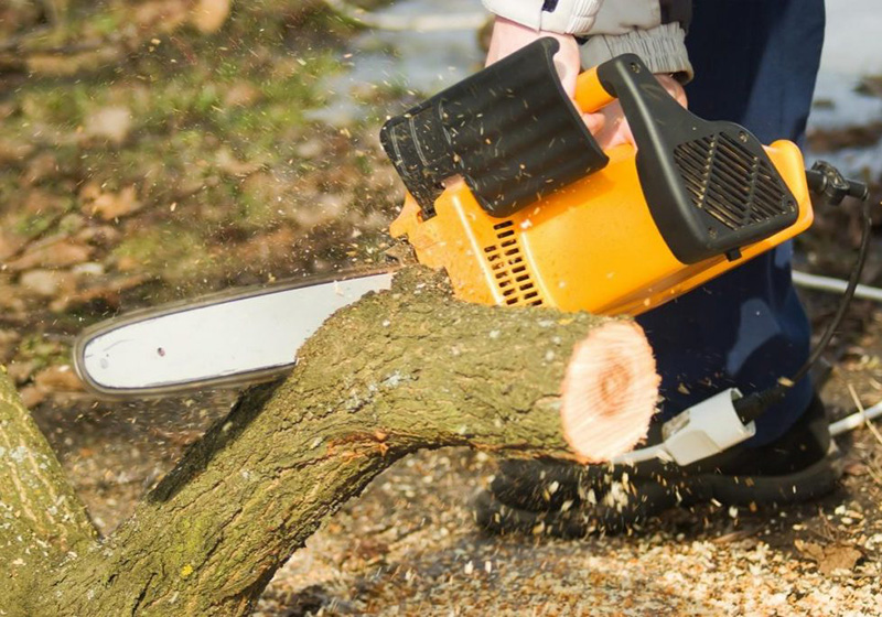 chain saw cutting a stump