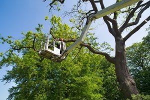 boom lift tree trimming in Vernon
