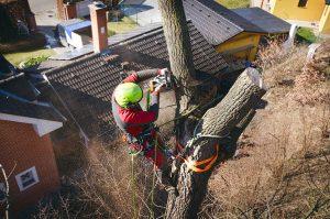 Using a crane to remove a tree in Vernon BC
