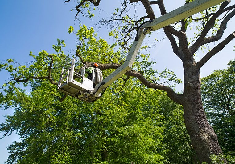 boom lift tree trimming in Vernon